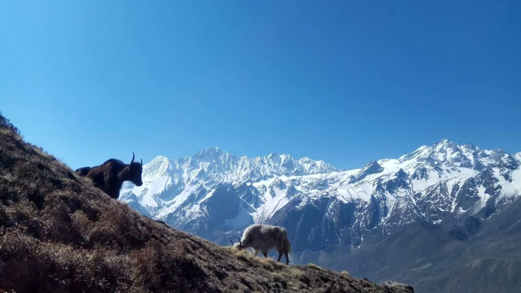 Tamang Heritage Trek Nepal