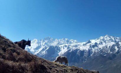 Langtang and Gosaikunda trek